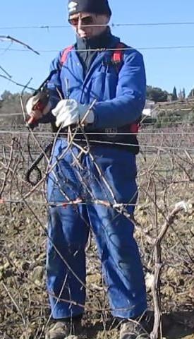 Pruning Syrah
